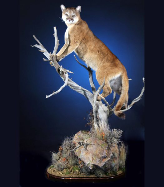 Taxidermy rocks