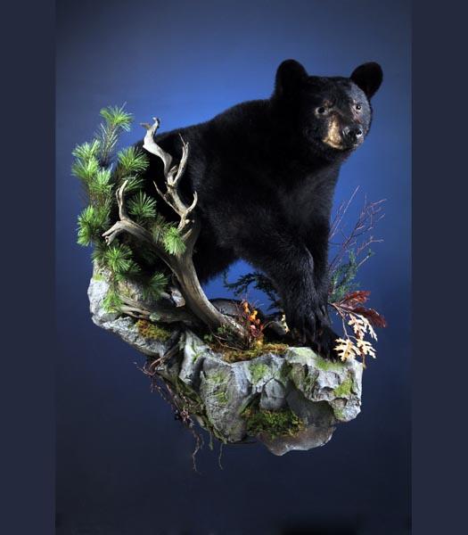 Web low bear