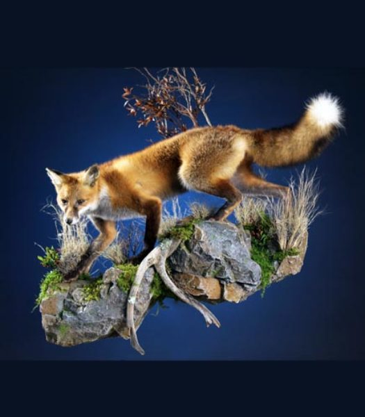 Web low fox