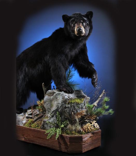 Web bear 2