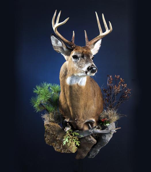 Web Deer